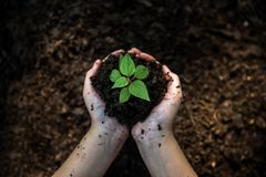 De holdingsjonge planten van het handenkind op de achtergrond in het aardpark van de groei van installatie royalty-vrije stock foto