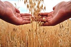 De holdingskorrel van de landbouwer Royalty-vrije Stock Afbeeldingen