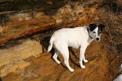 De Holen van hondjack russell terrior nature walk sandstone Royalty-vrije Stock Afbeeldingen