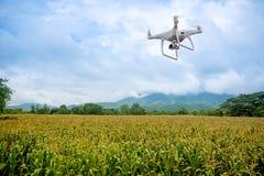 De hommel met professionele camera neemt beelden van het graanlandbouwbedrijf royalty-vrije stock afbeelding