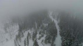 De hommel vliegt in het snow-covered naaldbos tijdens de mist stock footage