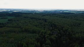 De hommel vliegt voorbij treetops en vliegt over het bos stock video