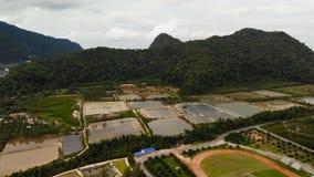 De hommelmening aan gebied met garnalen bewerkt bij groene heuvel in berg in Suratthani-provincie Khanom, Thailand Enkele landbou stock video