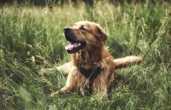 De hond Royalty-vrije Stock Afbeeldingen