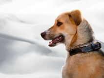 De hond Stock Foto