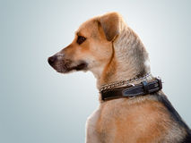 De hond Royalty-vrije Stock Foto's
