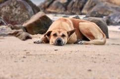 De hond Royalty-vrije Stock Foto