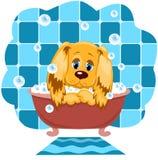 De hond baadt. Royalty-vrije Stock Fotografie