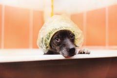 De hond in de badkamers stock fotografie