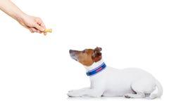 De hond behandelt stock afbeeldingen