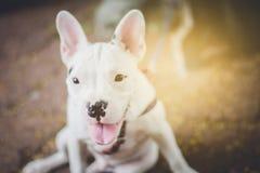 De hond beschermt het huis royalty-vrije stock foto