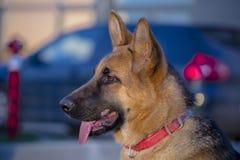 De hond beste vriend van elk van ons Stock Foto