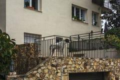 De hond bevindt zich op het terras van het huis en bekijkt stre Royalty-vrije Stock Foto