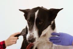 De hond bij dierenartskliniek isoleerde witte achtergrond Royalty-vrije Stock Fotografie