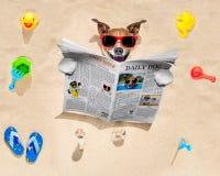 De hond bij het strand leest krant Stock Afbeelding