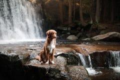 De hond bij de waterval Huisdier op aard buiten het huis Weinig profiel van de rivierhond royalty-vrije stock afbeeldingen