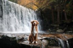 De hond bij de waterval Huisdier op aard buiten het huis Weinig profiel van de rivierhond royalty-vrije stock fotografie