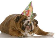 De hond blazende hoorn van de verjaardag stock afbeeldingen