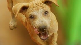 De hond is boos royalty-vrije stock fotografie