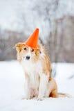 Hond die een hoedenkegel dragen Stock Afbeeldingen