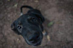 De hond in de tempel Royalty-vrije Stock Fotografie