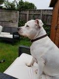 De hond denkt hes de stoelen van een persoonstuin stock afbeeldingen