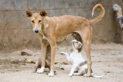 De hond die het is jong verzorgt Stock Afbeeldingen