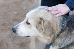 De hond die met eigenaar gaan Stock Foto