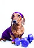 Hond en sporten Stock Foto
