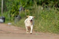 De hond die of op weg lopen lopen royalty-vrije stock fotografie