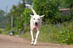 De hond die of op weg lopen lopen stock afbeeldingen