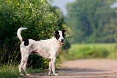 De hond die of op weg lopen lopen stock afbeelding