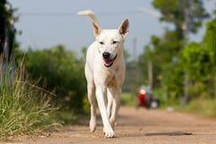 De hond die of op weg lopen lopen stock fotografie