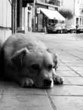 De hond die op zijn meester wachten stock afbeeldingen