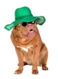 De hond die van de dame strohoed en zonglazen draagt Stock Foto's
