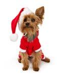De hond die van de Terriër van Yorkshire een santakostuum draagt Royalty-vrije Stock Afbeeldingen