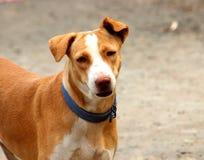 De Hond die van het land zich op de weg bevinden royalty-vrije stock afbeeldingen