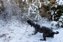De hond die van rietcorso boomtak trekken stock afbeeldingen