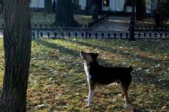 De hond dreef de kat op de boom stock fotografie