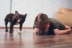 De hond eet het voedsel de gastheer eet hondevoer concept het aantrekken van rente in droog voedsel huisdier het voeden probleem stock foto