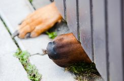 De hond en de deur royalty-vrije stock foto