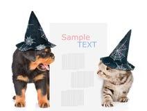 De hond en de kat met hoeden voor Halloween gluren uit van achter het aanplakbord en het bekijken tekst Geïsoleerdj op witte acht stock afbeeldingen