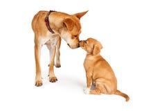 De hond en het puppy van de moeder Stock Foto's