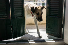 De hond gaat ruimte in Royalty-vrije Stock Foto's