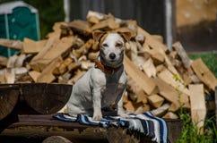 De hond in het dorp Stock Afbeeldingen