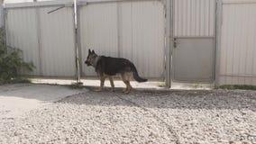 De hond in het dorp zit gebonden aan een ketting De gebonden hond zit bij de omheining Hond die op Zijn Meester wachten stock video