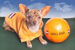 De hond Holland van het voetbal Stock Afbeeldingen