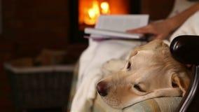 De hond houdt de lezing van het vrouwenbedrijf, zitting op een bank stock video