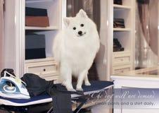 De hond houdt van u enkel de manier u bent! Zelfs als u een blonde en als om bent te nemen selfie! Royalty-vrije Stock Foto