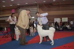 De hond juged Royalty-vrije Stock Foto